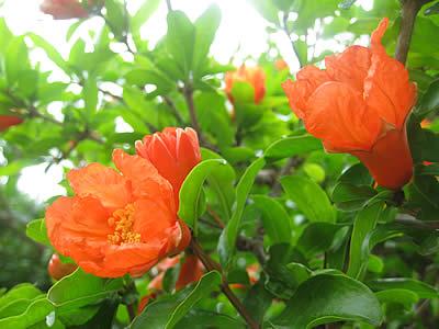 20091105zakuro0711.jpg