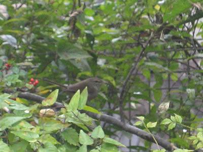 20091215yachob1020.jpg