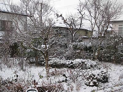 20091218niwa.jpg