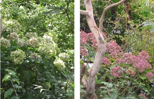 20091222ajisaishiro0826&1024.jpg