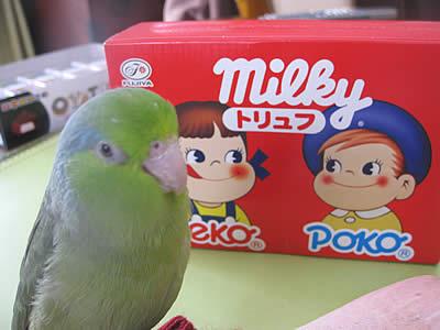 20100214ruri&milky.jpg