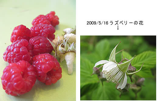 20100220raspberryflower.jpg