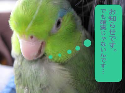 20100520oshirase.jpg