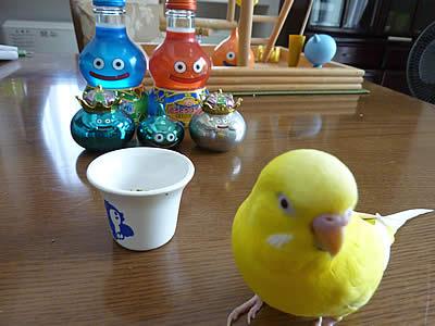 20100715piyo&slime.jpg