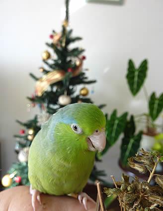 20101224ruri&tree.jpg
