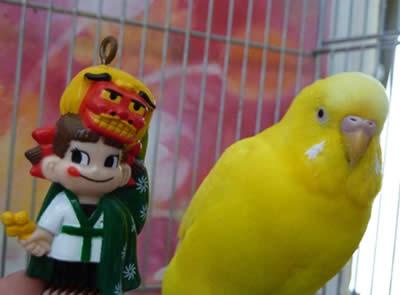 20110107peko&piyo2.jpg
