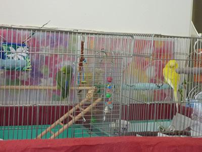 20110410ruri&piyo2.jpg
