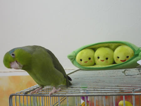 20120409ruri&peas2.jpg