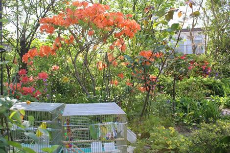 20120531ruripiyoinoniwa0519.jpg