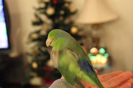 20121225ruri&tree.jpg