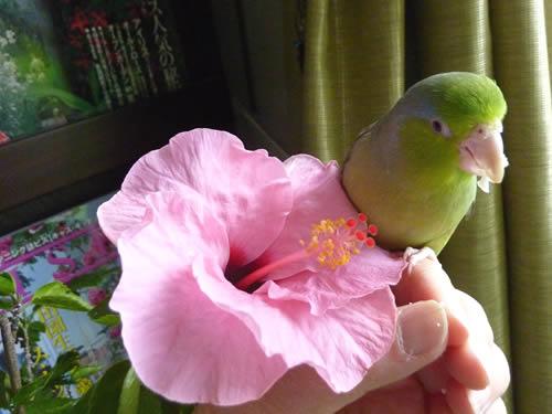 20130314ruri&flower.jpg