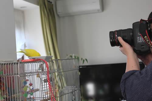 piyo&photographer.jpg